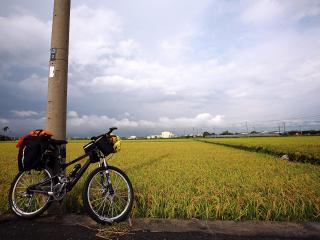 обои Велосипед у столба и поле проса фото