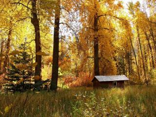 обои Маленький домик в осеннем лесу фото