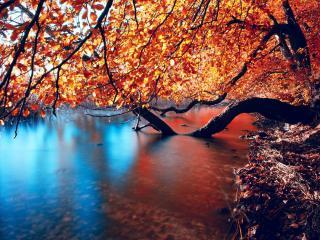 обои Осенний берег водоема фото