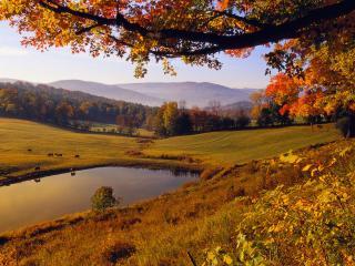 обои Осенний вид с лугами и прудом фото