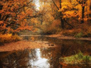 обои Осень у лесной речки фото
