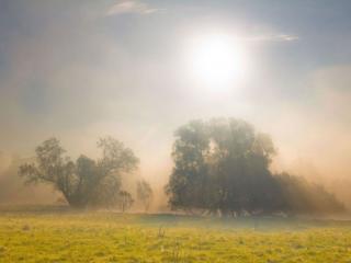 обои Сквозь утренний туман фото