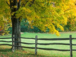 обои Ограда у дерева с пожелтевшей листвой фото