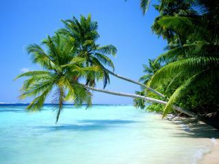 обои Склонившиеся пальмы над океанической водой фото