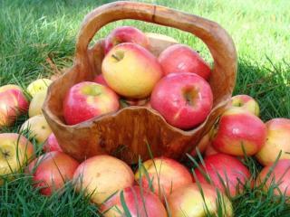 обои Яблочки наливные фото