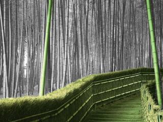 обои Ступеньки в бамбуковом парке фото