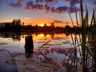 обои Закат на болоте фото