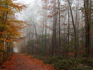 обои для рабочего стола: Ровная дорога в осеннем лесу