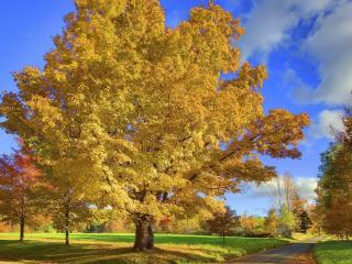 обои Роскошное деревья пожелтевшие у дороги фото