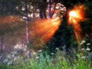 обои Закат в лесу фото
