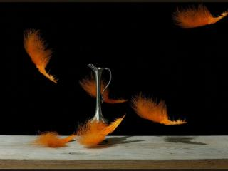 обои Красные перья и кувшин фото