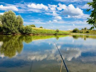 обои Небольшой летний пруд, богатый на рыбу фото
