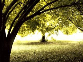 обои Солнечный свет между деревьев в парке фото