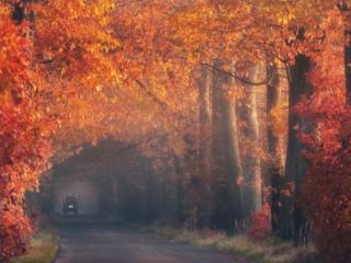 обои Дорога в красном лесу фото