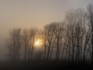 обои Групка деревьев и солнце в тумане фото