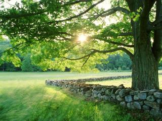 обои Дерево у каменной изгороди фото