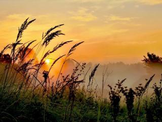 обои Утренний тёплый туман на лугу фото