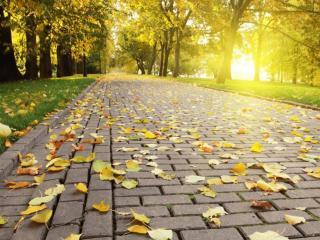 обои Осенняя аллея освещённая солнцем фото