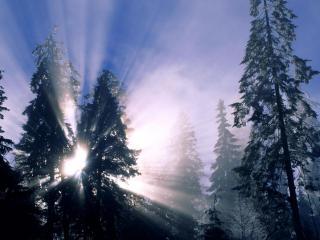 обои Просвет солнца сквозь деревья фото