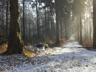 обои для рабочего стола: Проселочная дорога припорошенная снегом
