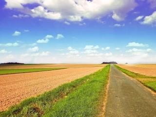 обои для рабочего стола: Узкая и ровная дорога между полей