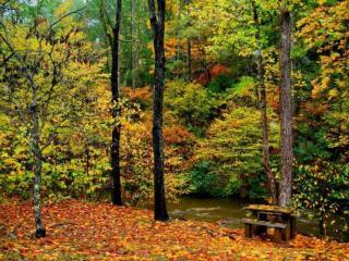 обои Осень в лесопарке фото