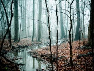 обои Поздней осени туман фото