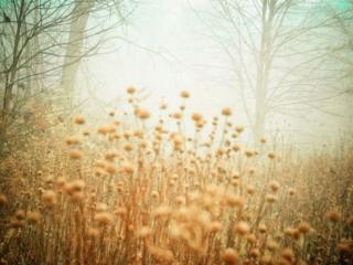 обои Туманное утро в осеннем лесу фото