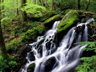 обои Водопад в национальном парке фото
