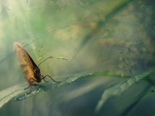 обои Бабочка сложив крылья на листике сидит