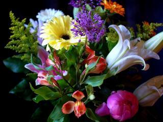обои Букет разноцветных цветочков