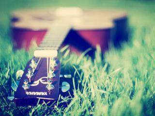 обои Гитара на траве фото
