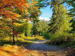 обои Дорога по горному лесу фото