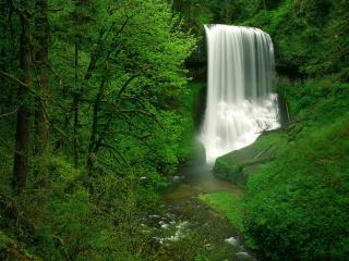 обои Водопад среди яркой зелени фото