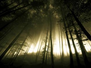 обои Дымка в высоком лесу фото
