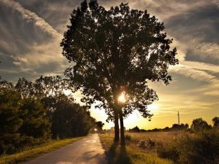 обои для рабочего стола: Закат у дороги с деревьями