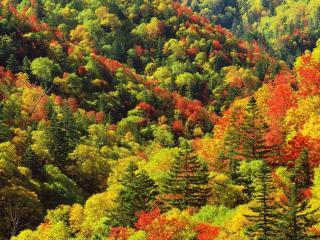 обои Красно-желто-зеленый лес осенью фото