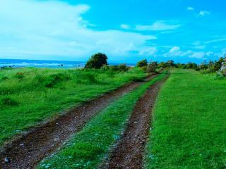 обои Накатанная колея дороги по зеленой траве фото