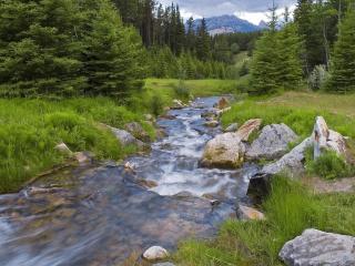 обои для рабочего стола: Летний лесной ручей, горы вдали