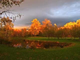 обои Пожелтевшие кроны деревьев на закате фото