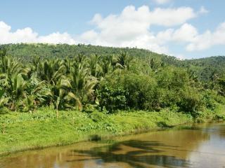 обои Озеро и густой тропический лес фото
