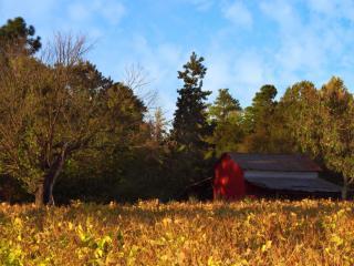 обои Поле у домa а и деревья фото