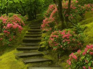 обои Цветущие кусты у вымощенных ступенек фото