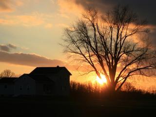 обои Домик дерево и закат фото