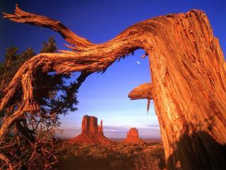 обои Согнутое и потрескавшее старое дерево фото