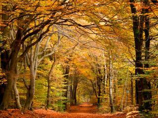 обои Лесная дорожка в лесу пожелтевшем осенью фото