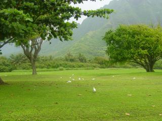 обои Равнина с редкими деревьями и тропический лес с горами фото