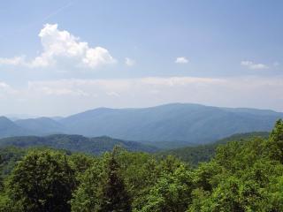 обои Бескрайние горные леса фото