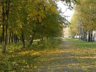 обои Пешеходная дорожка засыпанная опавшими березовыми листьями фото