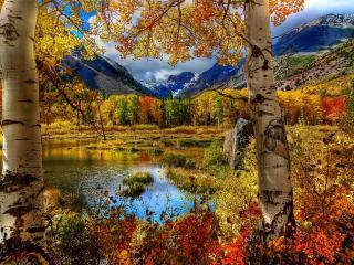 обои Разноцветные деревья осенние у озера и гор фото
